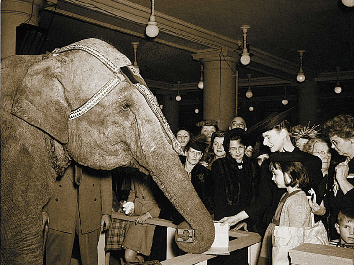 Elephant book signing