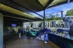 Photo of the finished Mayari Pritzker Penguin Cove at Lincoln Park Zoo