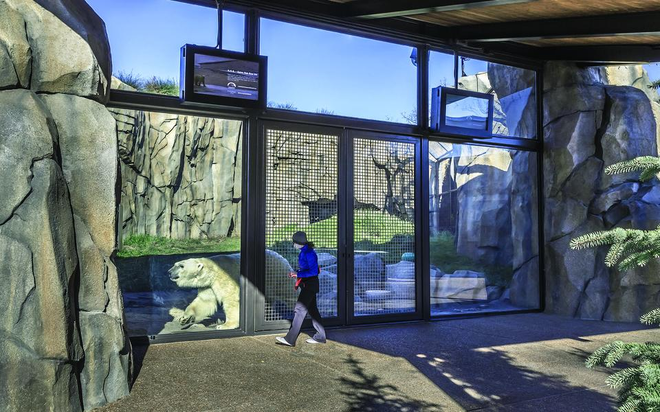 Photo of the finished Walter Artic Tundra Exhibit at Lincoln Park Zoo